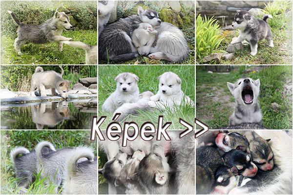Képek a kiskutyákról >>